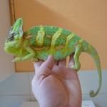 U Chameleona P1040096