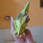 U Chameleona P1040097